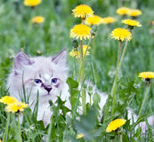 Маленький котенок стоковое фото rf