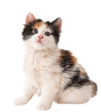Маленький котенок стоковая фотография