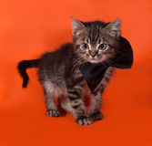 Маленький котенок tabby в бабочке стоя на апельсине стоковое изображение rf