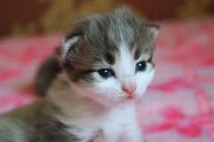 Маленький кот играя на кровати Стоковые Изображения RF