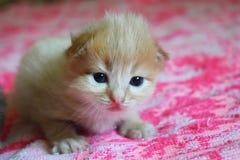 Маленький кот играя на кровати Стоковые Изображения