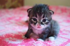 Маленький кот играя на кровати Стоковая Фотография