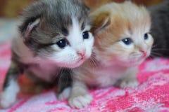 Маленький кот играя на кровати Стоковое Фото
