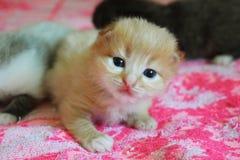 Маленький кот играя на кровати Стоковые Фото
