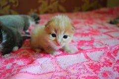 Маленький кот играя на кровати Стоковое Изображение