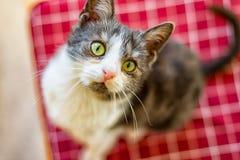 Маленький кот котенка стоковая фотография rf