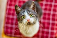Маленький кот котенка стоковые фото