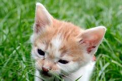 Маленький кот младенца Стоковое фото RF