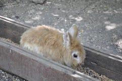 Маленький кролик в парке Стоковые Фотографии RF