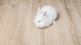 Маленький кролик на деревянной предпосылке Стоковые Фотографии RF