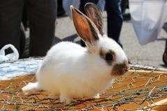 маленький кролик стоковая фотография