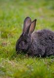 маленький кролик Стоковые Фото