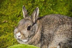 маленький кролик Стоковая Фотография RF