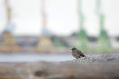 Маленький крупный план птицы стоковая фотография rf