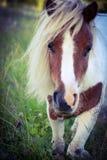 Маленький милый пони Стоковое Изображение