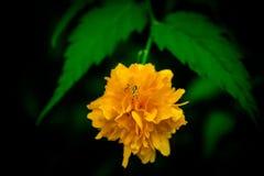 Маленький паук на цветке Стоковые Фото
