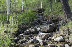 Маленький поток Стоковая Фотография