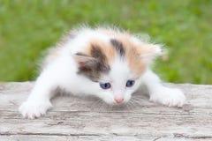 Маленький пушистый котенок держит лапки стоковое изображение