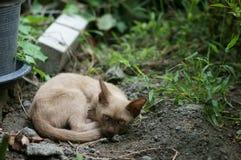 Маленький рассеянный коричневый класть кота Стоковые Изображения