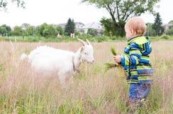 Маленький ребенок подает коза Стоковые Фото