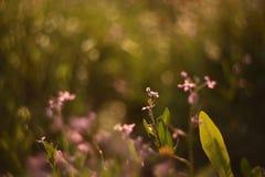 Маленький розовый wildflower стоковое изображение rf