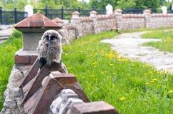 Маленький сердитый сыч сидя на загородке стоковое фото