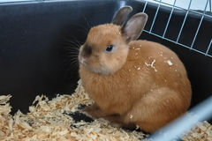 Маленький смешной коричневый конец-вверх кролика в клетке Стоковые Фото
