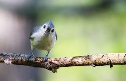 Маленький смотреть птицы стоковая фотография rf