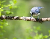 Маленький смотреть птицы стоковые изображения rf