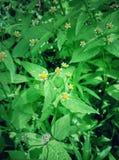 Маленький стоцвет Стоковое Изображение RF