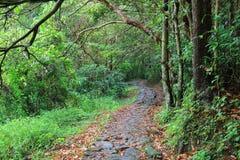 маленький след Гаваи на kung sai tko Стоковые Фото