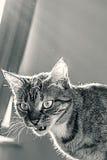 маленький тигр Стоковая Фотография RF