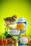 Маленький цыпленок с маргаритками стоковое фото