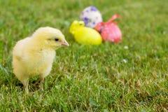 Маленький цыпленок с пасхальными яйцами и цветком на траве Стоковая Фотография RF