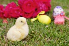 Маленький цыпленок с пасхальными яйцами и цветком на траве Стоковые Фотографии RF