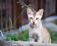 Маленький шаловливый котенок Стоковые Изображения