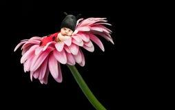 Маленький ladybug младенца Стоковые Фото