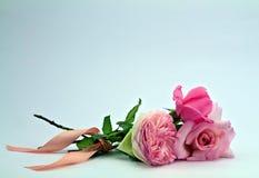 Маленький posy нежных изолированных роз Стоковое Изображение RF