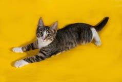 Маленький striped котенок лежа на желтом цвете Стоковые Фотографии RF