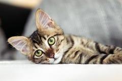 Маленький striped котенок с зелеными глазами Стоковое Фото