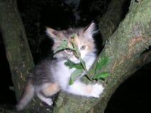 Маленький tricolor устрашенный котенок пряча за хворостиной на дереве Стоковое Фото