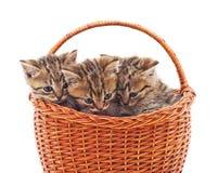 3 маленьких котят в корзине Стоковое Изображение