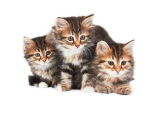 3 маленьких котят Стоковое Фото