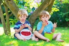 2 маленьких мальчика отпрыска есть поленики в саде дома Стоковая Фотография