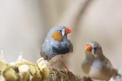 2 маленьких пташки Стоковое Изображение