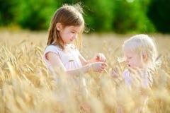 2 маленьких сестры в пшеничном поле на летний день Стоковые Изображения RF