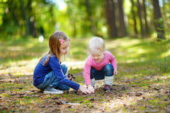 2 маленьких сестры собирая конусы сосны стоковые фото