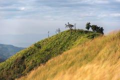 Маленькое дерево на горе Стоковая Фотография