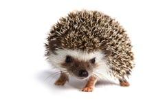Маленькое животное Стоковая Фотография