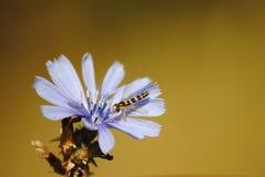 Маленькое насекомое на цветке Стоковое Изображение